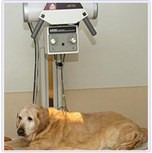 Portable Veterinary X RAY